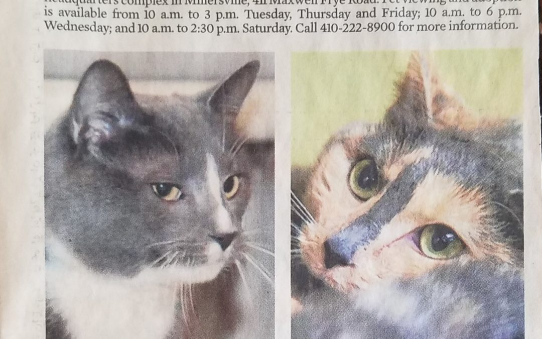 NEWSPAPERS FREE PUBLICITY FOR ANIMAL RESCUE GROUPS