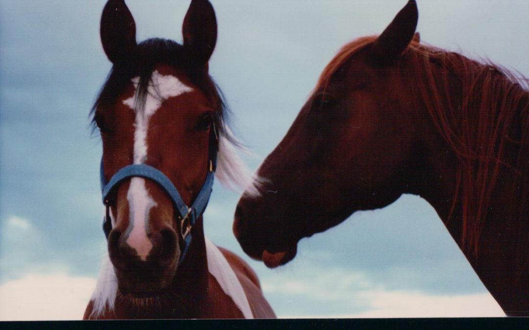 PAST AND PRESENT HORSE OWNERS CAN CONNECT HERE FOR FREE